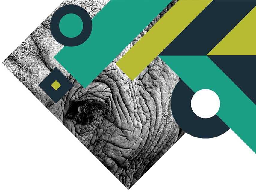 closeup image of an elephant